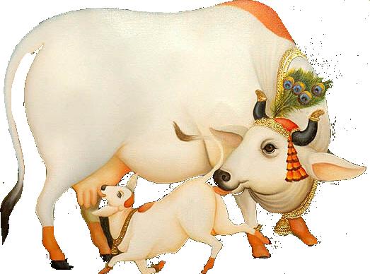 Kamdhenu Gau Shala - Indian Cow With Krishna PNG