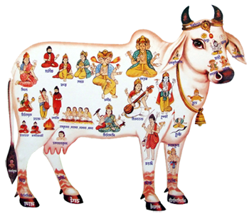 Indian Cow With Krishna PNG - 68419