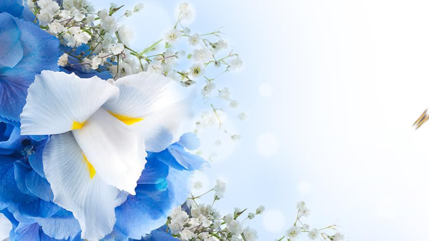 Blue and white flower trendy supertunia mini blue veined petunia amazing visually similar iris flower png hd with blue and white flower mightylinksfo