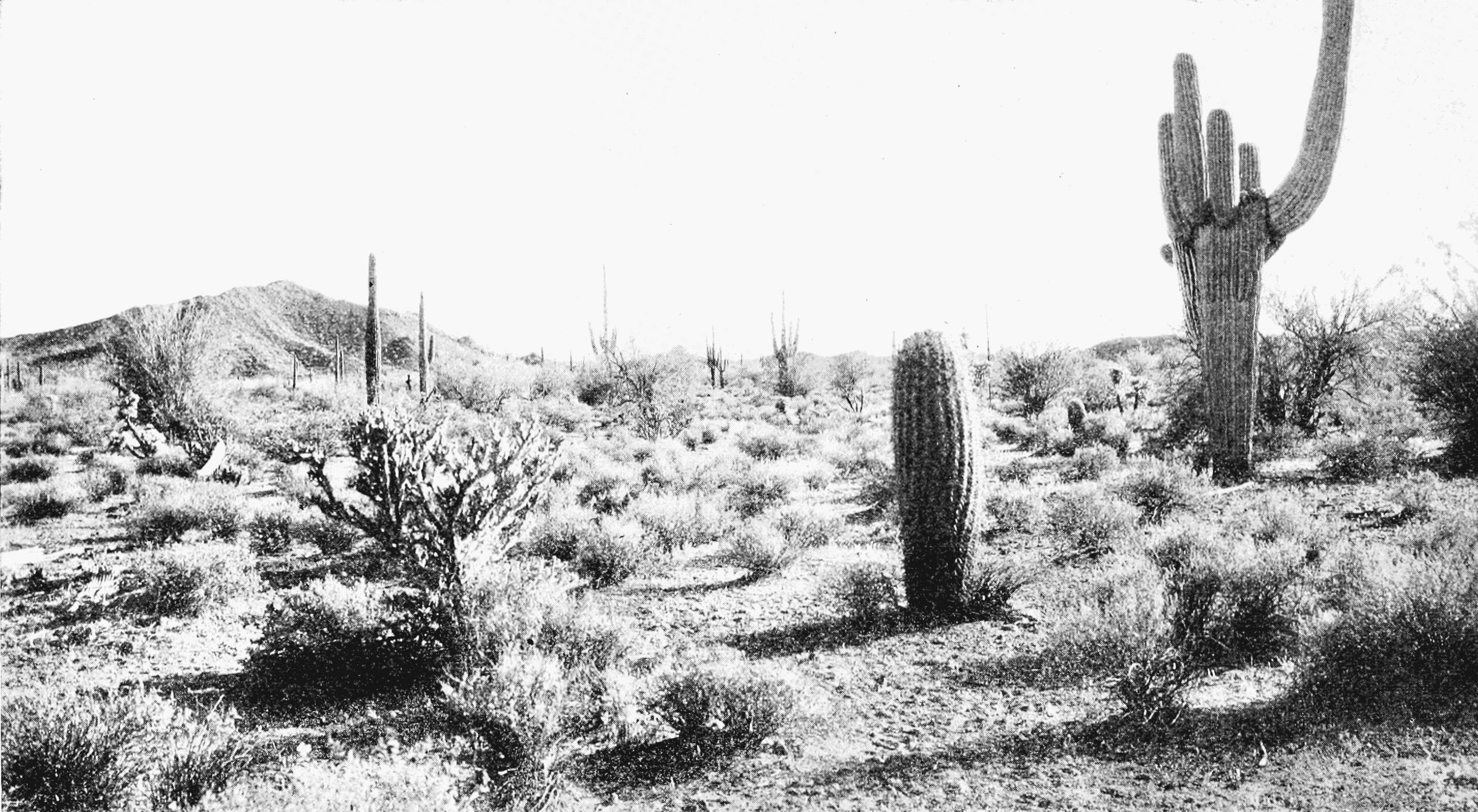 File:PSM V66 D110 Arizona desert scene without irrigation.png - Irrigation PNG Black And White