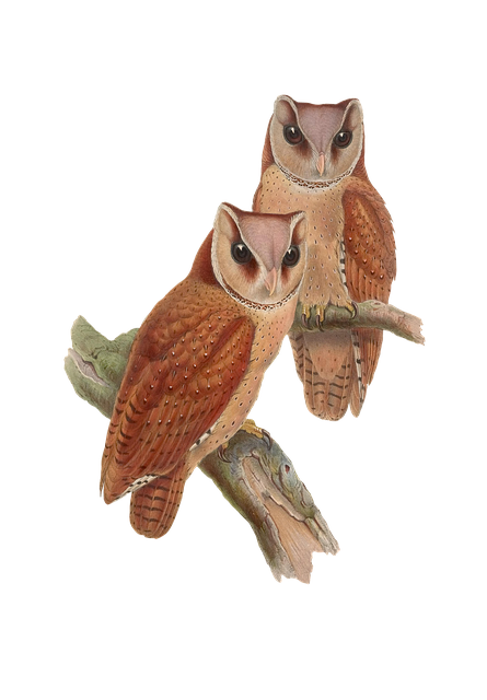 Bird, Owl, Animal, Vintage, Isolated, Png - Isolated PNG