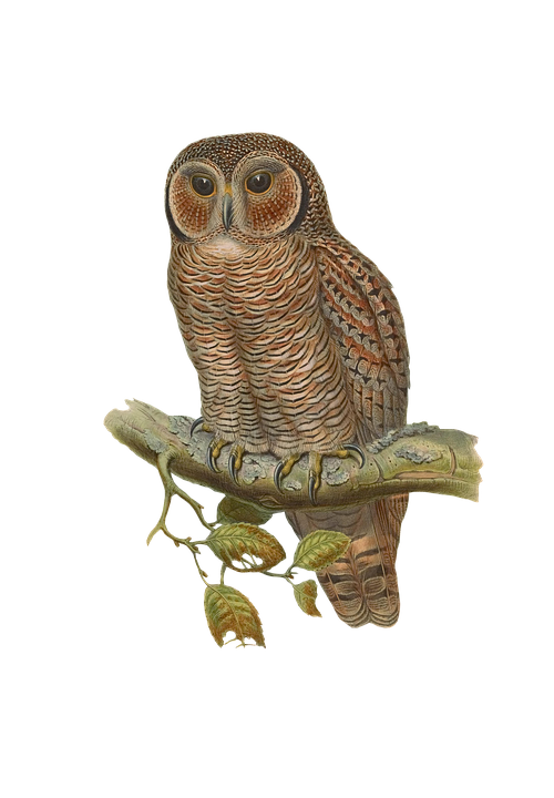 Bird, Owl, Animal, Vintage, I