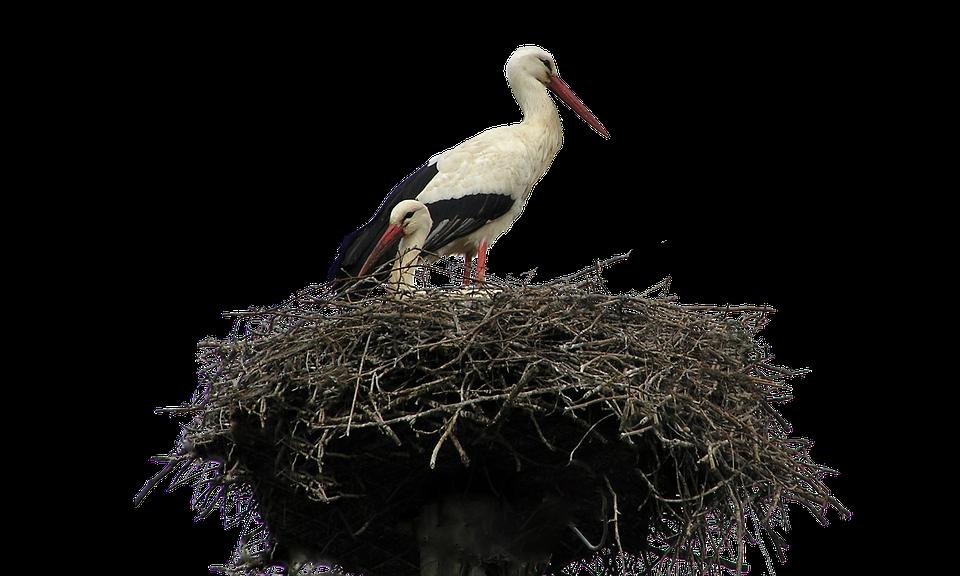 Isolated, White, Stork, Nest, Bird, Nature, Wildlife - Isolated PNG