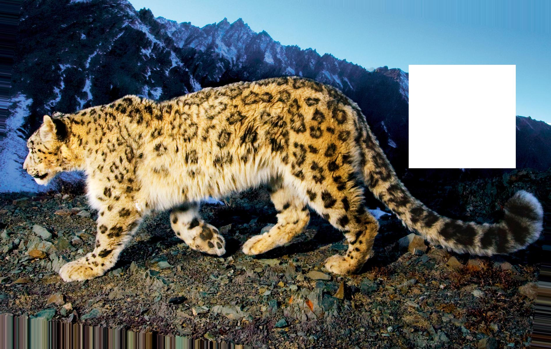 Jaguar Free Download Png PNG Image - Jaguar HD PNG