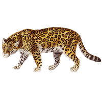 Jaguar Png PNG Image - Jaguar HD PNG