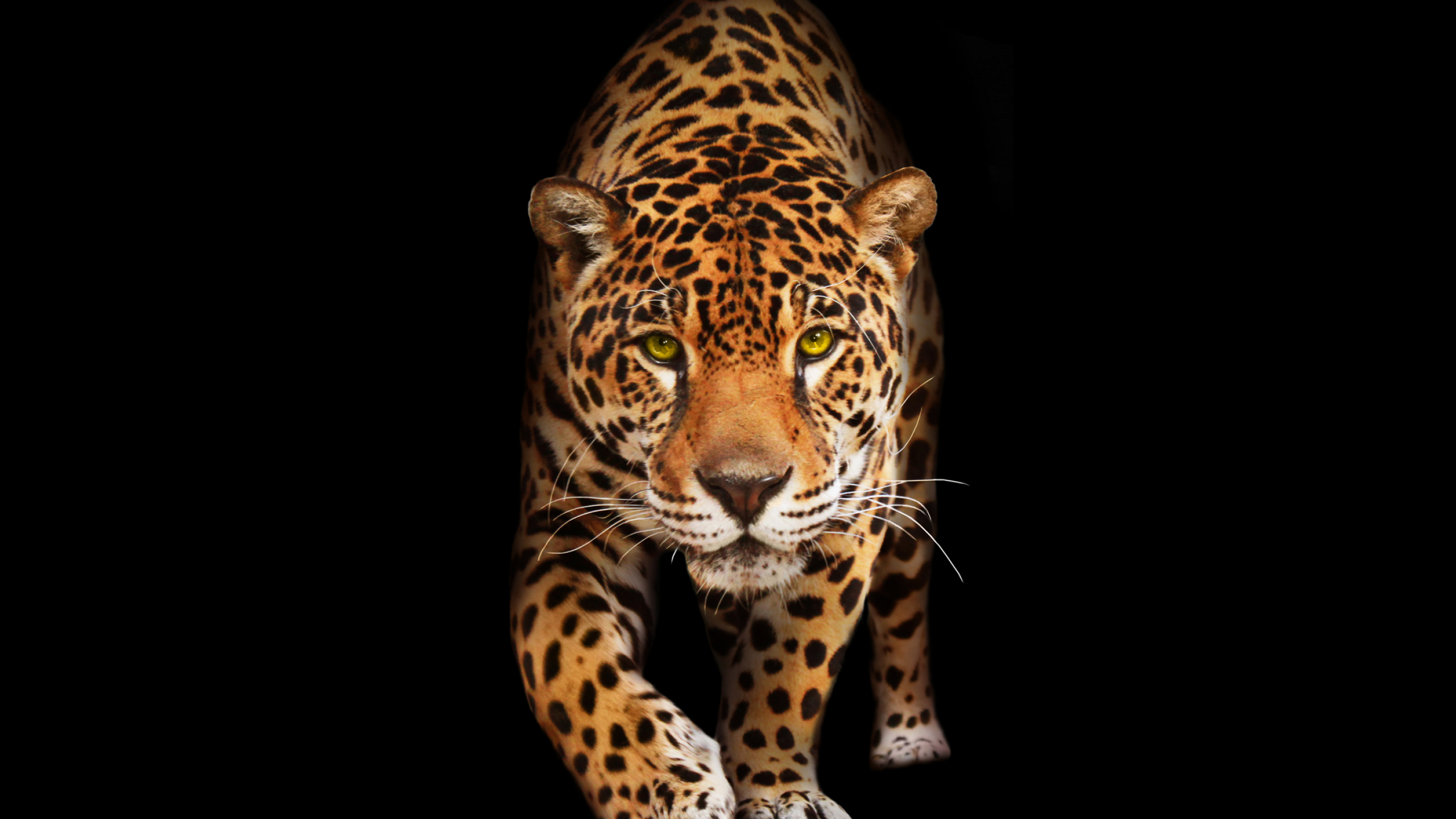 Tags: Jaguar, Dark, HD - Jaguar HD PNG