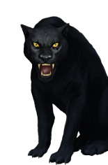 Black Jaguar.png