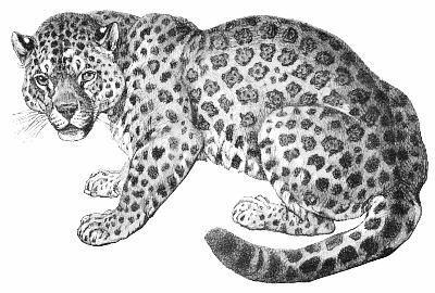 Free jaguar clipart 1 page of clip art - Jaguar PNG Black And White