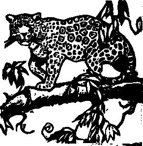 Jaguar PNG Black And White - 49094