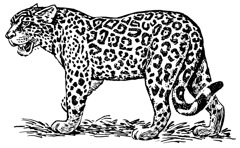 Jaguar PNG Black And White
