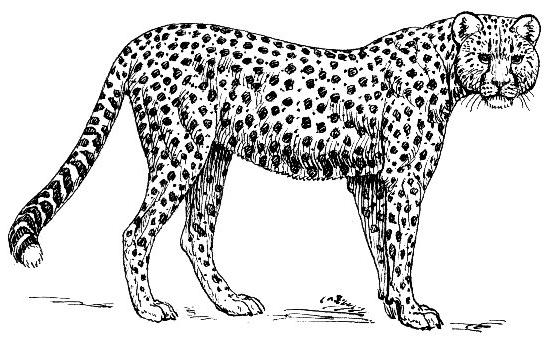 Jaguar clipart tumundografico 3 - Jaguar PNG Black And White