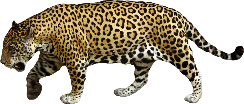 Download - Jaguar PNG