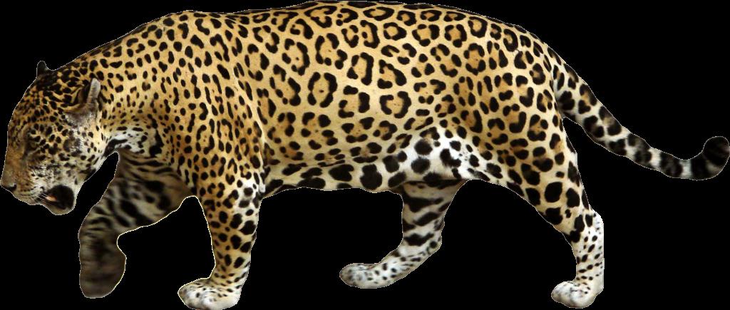 Jaguar PNG - 99549