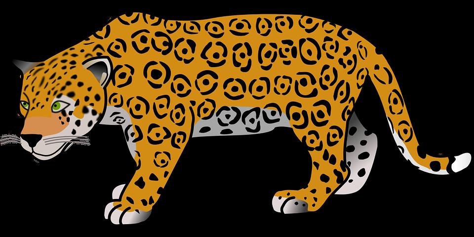 Hayvan, Jaguar, Tehlikeli, Memeli, Safari, Yabani - Jaguar PNG