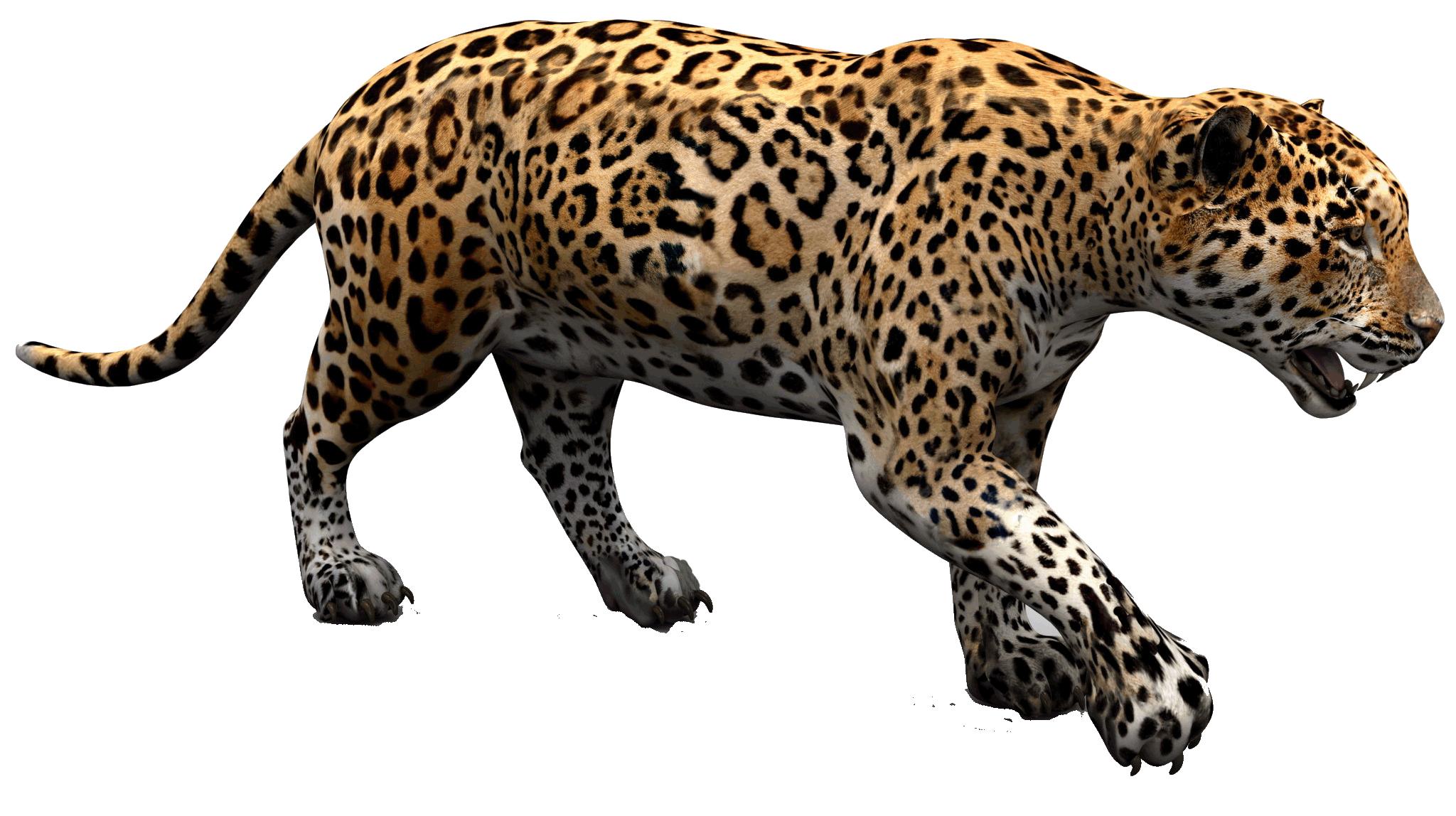 Jaguar PNG - 99547