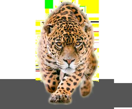 Jaguar PNG - 99563