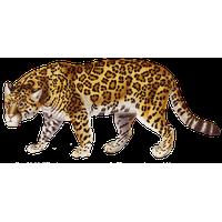 Jaguar PNG - 99562