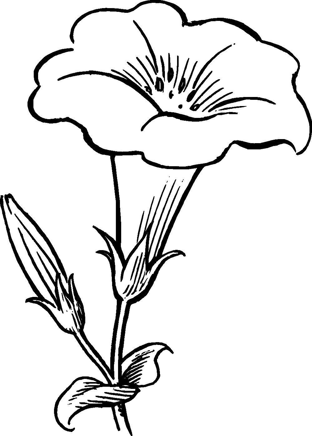 Jasmine PNG Black And White - 49732
