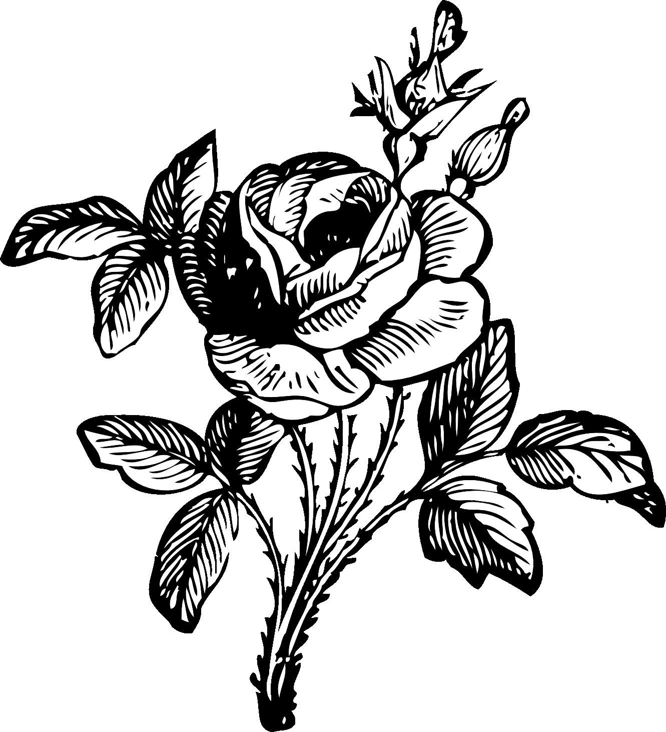 Jasmine PNG Black And White - 49739