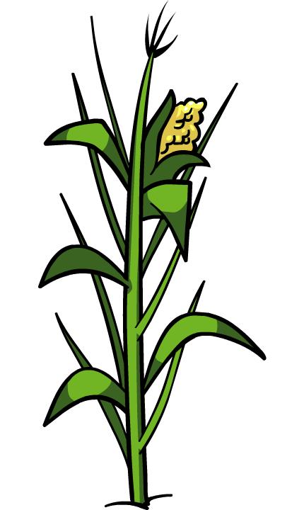 Corn Plant PNG File - Jowar Plant PNG