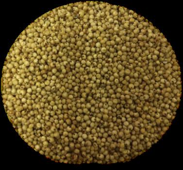 Jowar Grains - Jowar PNG
