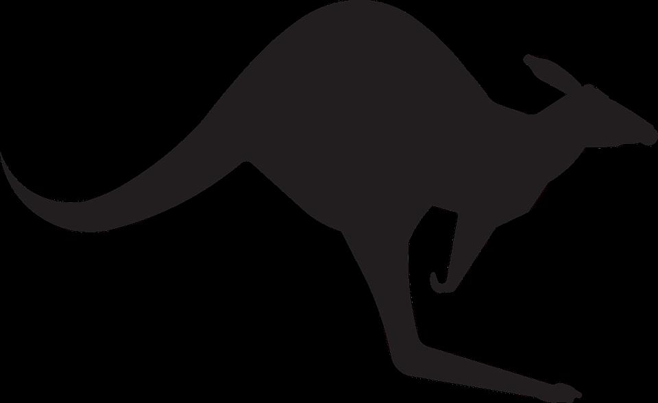 Kangaroo, Animal, Australia, Jump, Silhouette, Black - Jumping Kangaroo PNG