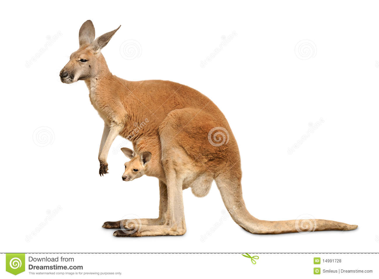 53600cd.png - Kangaroo PNG