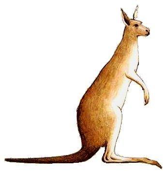 Kangaroo.png PlusPng.com  - Kangaroo PNG