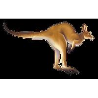 Similar Kangaroo PNG Image - Kangaroo PNG