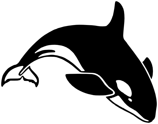 Killer Whale PNG - 14387