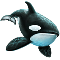 Killer Whale PNG - 14397