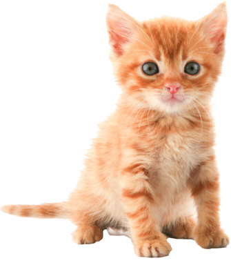 Filename: orange-kitten-psd54491.png - Kitten PNG