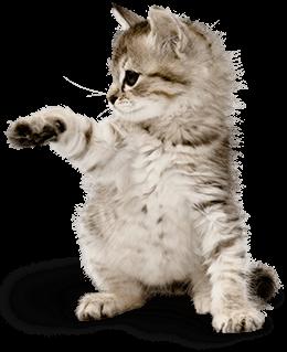 Adorable kitten - Kitten PNG HD