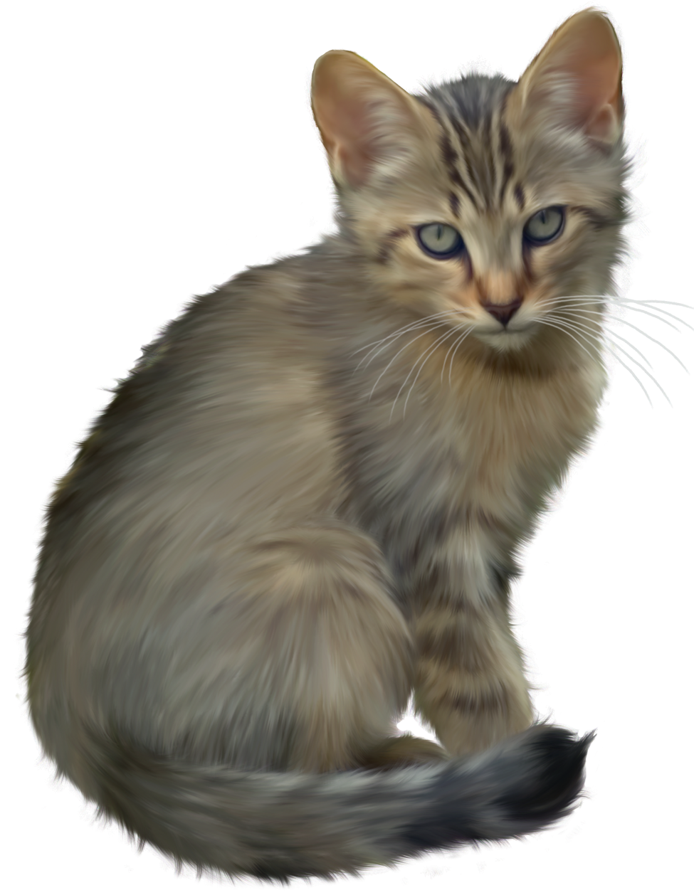 Kitten Transparent PNG Image - Kitten PNG HD