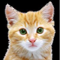 Kitten PNG - 25496