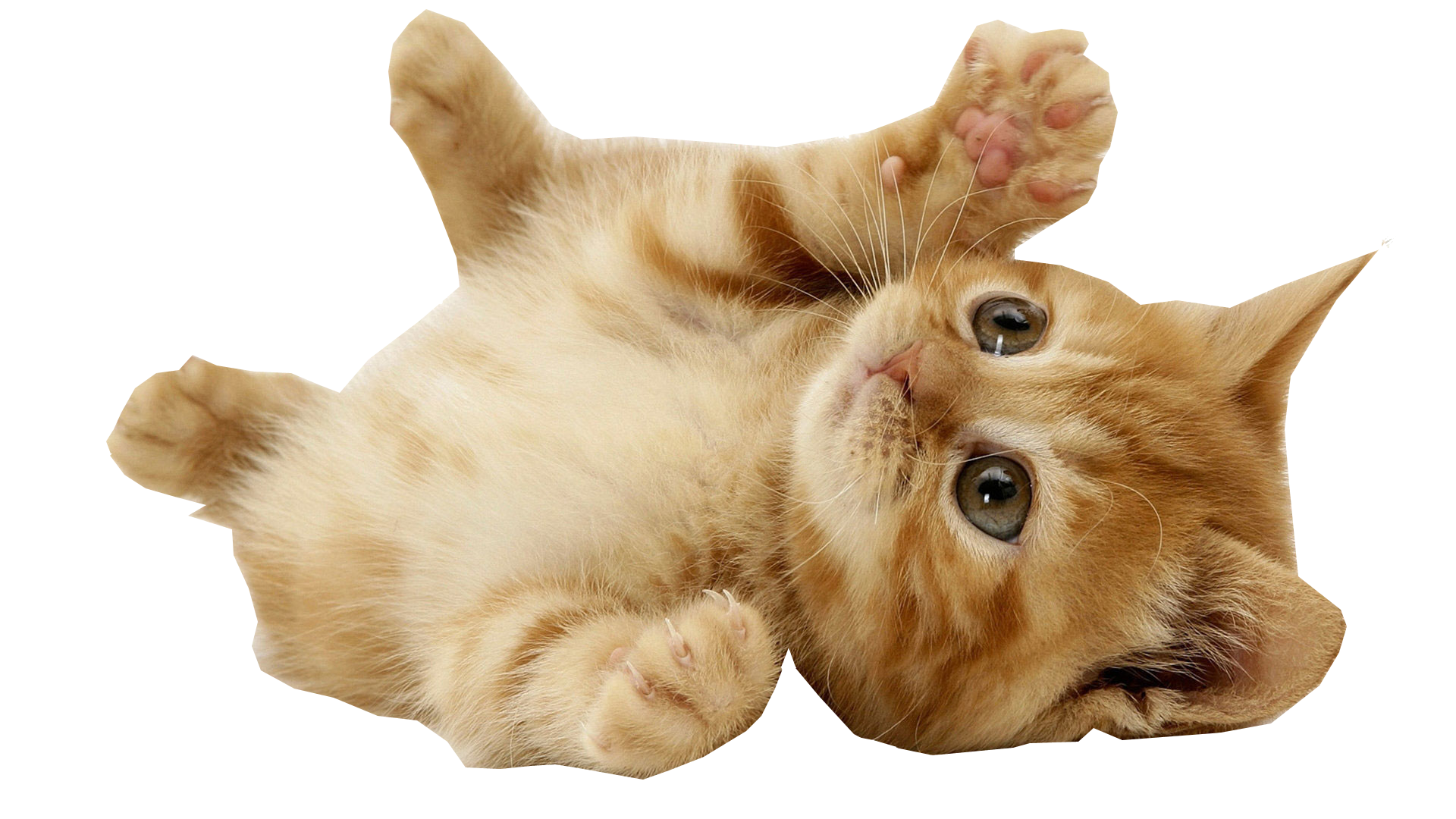 . PlusPng.com Kitten Playing transparent background - Kitten PNG