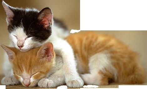 Kitten Png File PNG Image - Kitten PNG