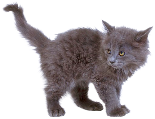 kitten png image, free download picture - Kitten PNG