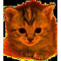 Kitten PNG - 25497