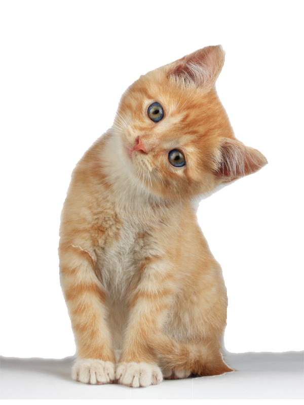 png 600x800 Orange kitten no background - Kitten PNG