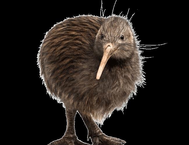 Kiwi Bird PNG-PlusPNG.com-650 - Kiwi Bird PNG