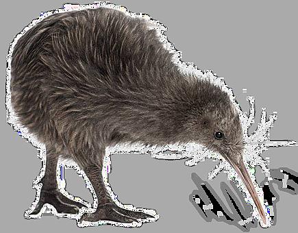 Kiwi Bird - Kiwi Bird PNG