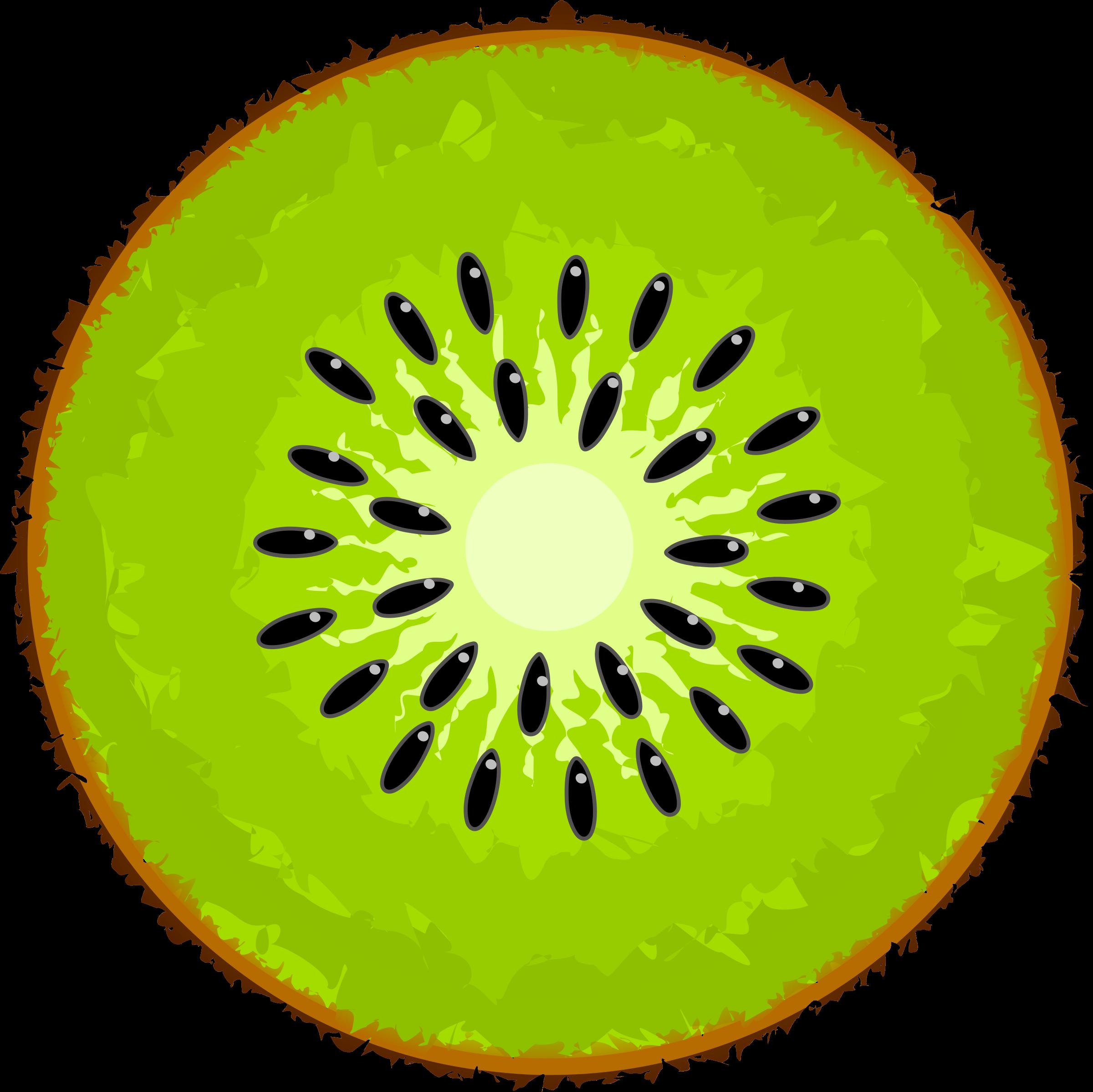 Kiwi Slice PNG - 44563