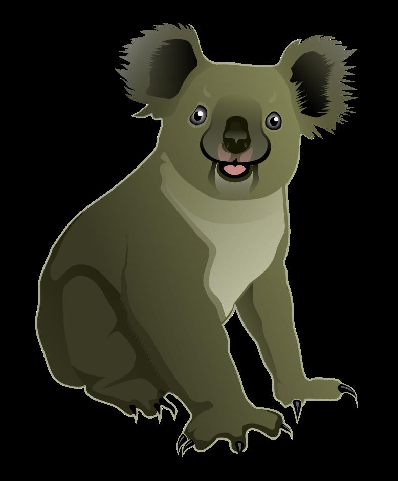 Koala PNG - Koala PNG HD