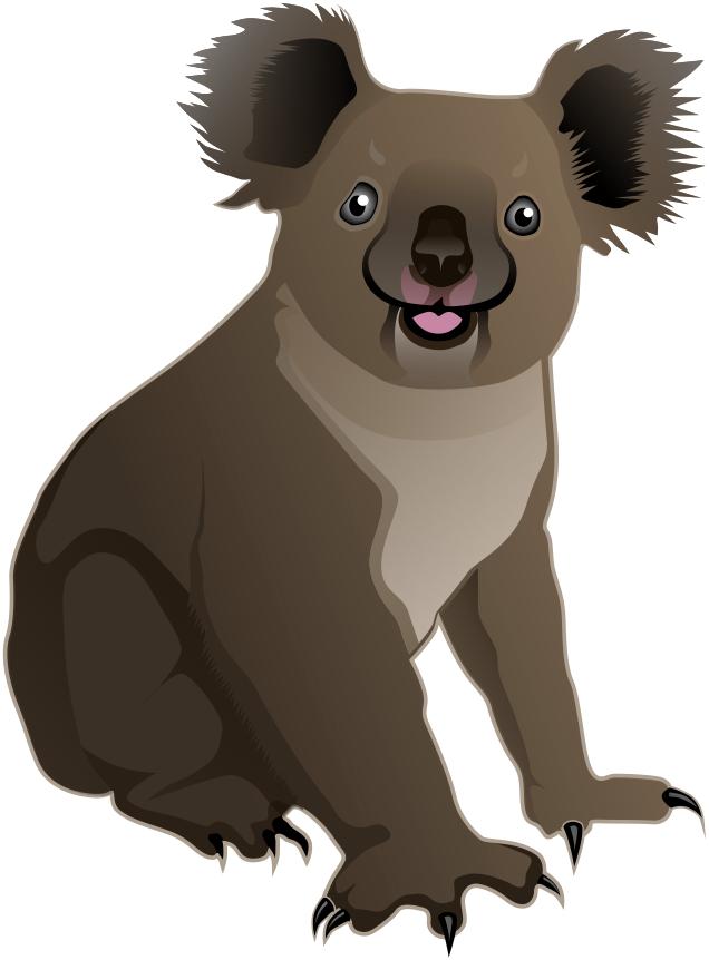 Koala PNG Images - 42918