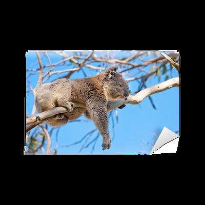 Koala Tree PNG - 42881