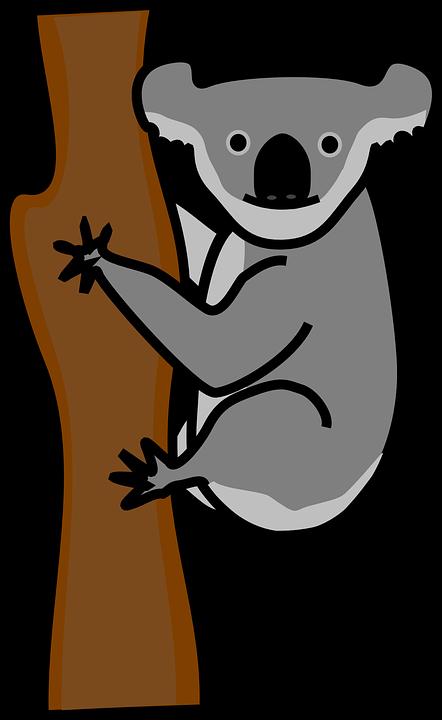 Koala Tree PNG - 42879