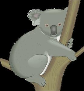 Koala Tree PNG - 42871