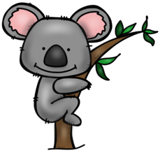 Koalas have a heavily padded wedge shaped backside to fit snuggly in the  fork of a tree. kangaroo.png - Koala Tree PNG