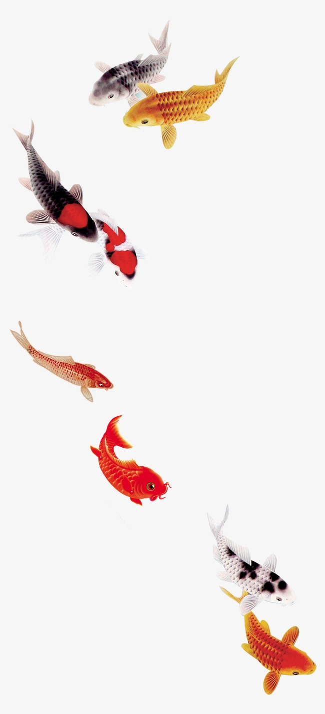 Koi Fish PNG HD - 127784